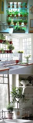 window herb gardens do you grow herbs in your kitchen one of the most effective winter
