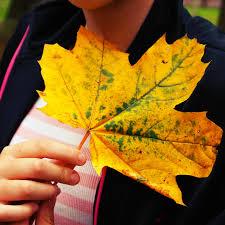 free images nature flower color autumn season maple tree