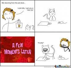 Stupid Cat Meme - stupid cat by anejavishesh meme center
