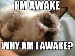 Grumpy Cat Sleep Meme - 305 best grumpy cat makes me smile images on pinterest grump cat