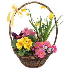 basket of flowers basket of flowers pictures photos and images for