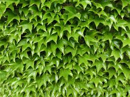 free images tree nature branch leaf flower produce ivy