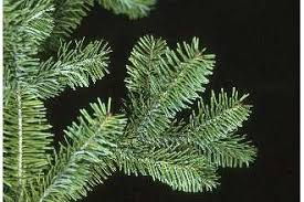 plants profile for abies balsamea balsam fir