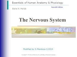 Essentials Of Human Anatomy And Physiology Notes The Nervous System Essentials Of Human Anatomy U0026 Physiology Ppt