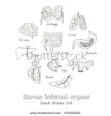 human anatomy icons set endocrine system stock vector 713995813