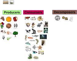 biosphere atmosphere geosphere and hydrosphere cycle 1 science