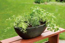 herbs that grow together in containers u2013 what herbs will grow in