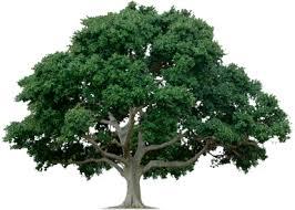 beat all genuine quotes class bristol tree surgeons