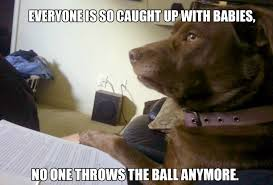 Lawyer Dog Meme - i didn t sign up for this time to call lawyer dog adviceanimals