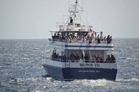 Whale Watches Cape Cod - cape cod marthas vineyard and nantucket tap into travel