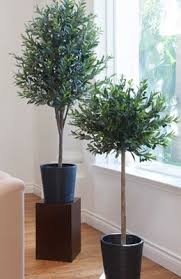 trees potted plants