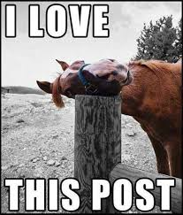 Like Your Own Post Meme - a very important post is coming soon horse meme meme and