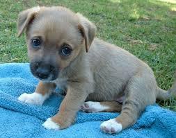 puppy2 jpg