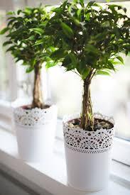 indoor plants can boost your creativity u2013 stellar wordpress theme