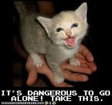 Internet Meme Cat - utexas memes a picture course for longhorns