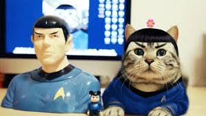 Star Trek Halloween Costume 23 Cats Halloween Costumes Holiday Existed