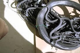 diy halloween snake wreath rosemary on the tv