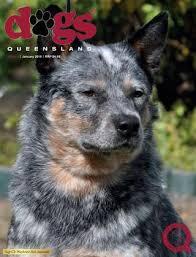resume template customer service australian kelpie breeders north dogs queensland the queensland dog world issue 6 june 2016
