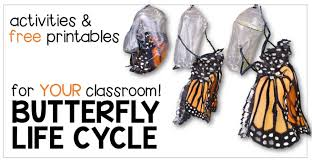 get butterfly life cycle activities u0026 free printables for your
