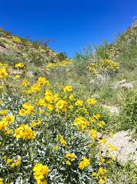 Anza Borrego Wildflowers Super Bloom by 11 Super Photos From Super Bloom Anza Borrego Desert State