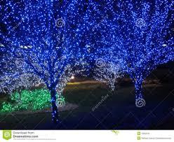 blue tree pair stock image fantastic lights