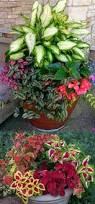 flowers for garden pots home outdoor decoration