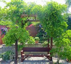 Plants For Pergolas by Small Pergola Kits That Will Make Your Backyard Look Like New