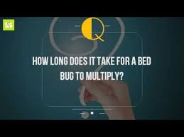 How Long Do Bed Bug Bites Take To Show Up How Long Does It Take For A Bed Bug To Multiply Youtube