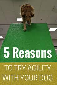 353 best dog agility images on pinterest dog agility training