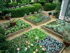 tips for a raised bed vegetable garden hgtv