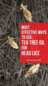 best 25 head lice prevention ideas on pinterest lice prevention