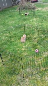 Kims Rabbit Hutch Breeding Genetic Color Calculator Kim U0027s Rabbit Hutch Rabbits