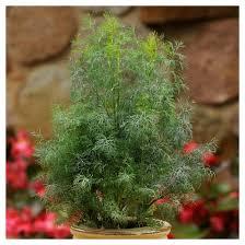 burpee herb garden u0027kitchen collection u0027 4