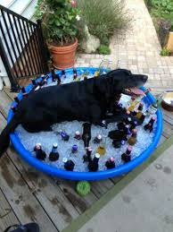 last day of u201cdog days of summer u201d hemmingford dog blog