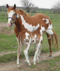 Are Horses Color Blind The 25 Best Rare Horse Colors Ideas On Pinterest Rare Horses