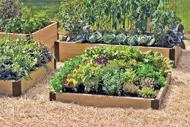 Small Vegetable Garden Design Ideas Vegetable Garden Design Small And Patio Wood Diy Raised Designs