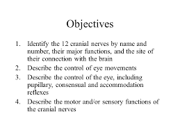 Exercise 17 Gross Anatomy Of The Brain And Cranial Nerves Cranial Nerves Lundy Ekman U2013chapter 13 U2013chapter 14 U2013chapter Ppt