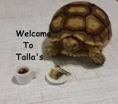 Tortoise Home Decor Talla U0027s House Sulcata Tortoise Setup Youtube