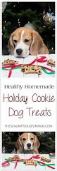 calvin u0027s christmas cookies dog treats the scrumptious pumpkin