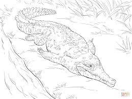 4 innovative crocodile coloring ngbasic