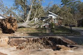 oak tree crashes through ceiling as family sleeps in chicopee