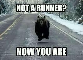 Running Bear Meme - bear meme running wild running pinterest bear meme meme and