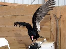 winter raptor fest