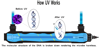 uv light for well water cost ultraviolet water sterilizer uv water filter