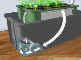 light requirements for growing tomatoes indoors how to grow hydroponic tomatoes with pictures wikihow