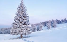 snow covered tree wallpaper 40436