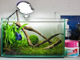 Beautiful Home Fish Tanks by 93 Best Beautiful Betta Fish And Their Homes Images On Pinterest