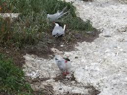 Seacoast spectacular birding and nature tournh audubon