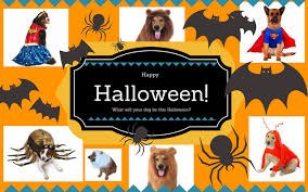 Spider Halloween Costume Dogs Dog Costumes Large Dogs Dog Bunker