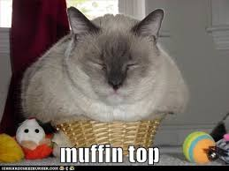 Muffin Top Meme - lolcats muffin top lol at funny cat memes funny cat pictures